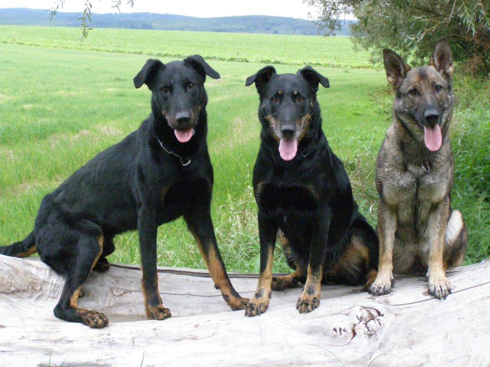 Hugo (vľavo)