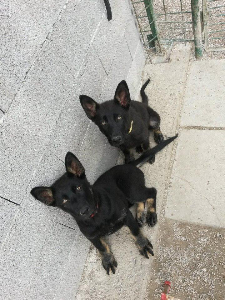 Roxy a Roxa