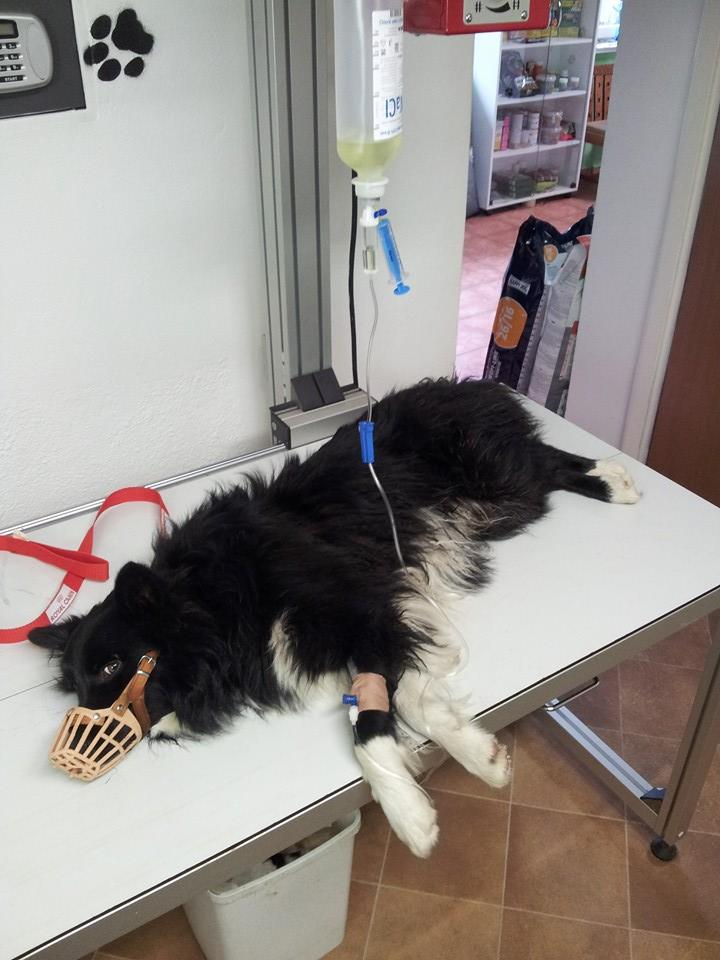Zrazený psík sa vrátil naspäť k majiteľom :)