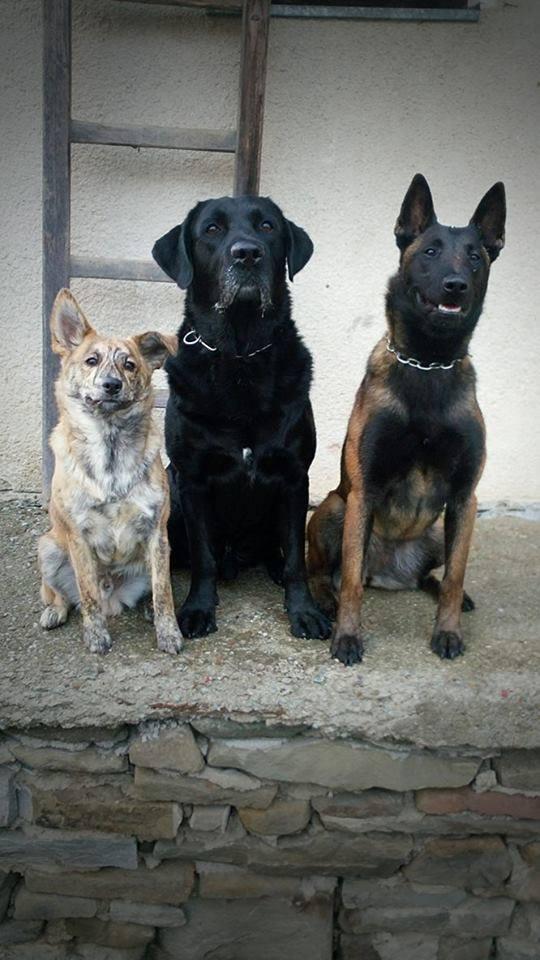 Buro (u nás Tigi) na foto vľavo :)